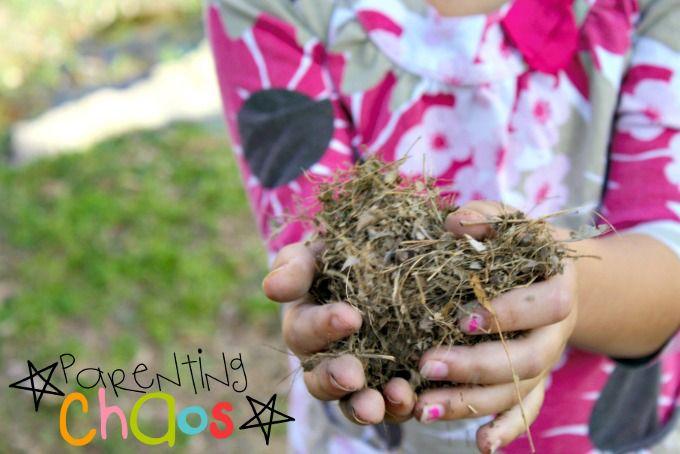 Dinosaur Nests - Collecting Grass