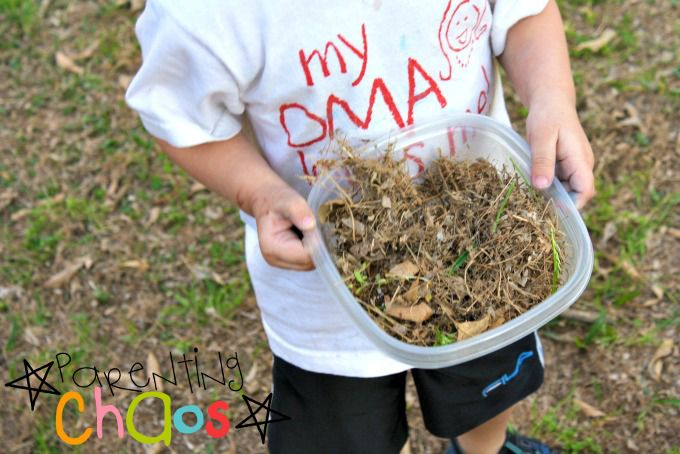 Dinosaur Nests - Collecting Grass
