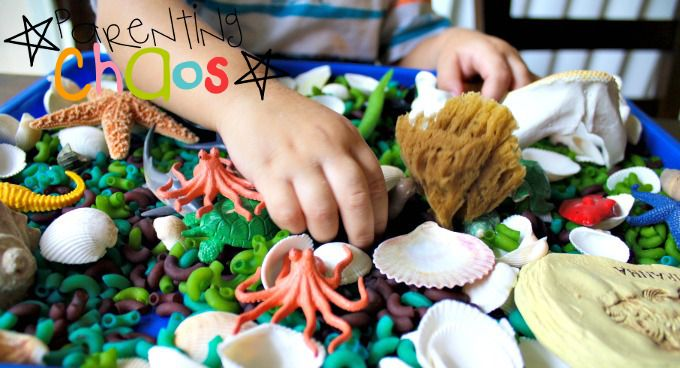Exploring a Ocean Animals Science Sensory Bin