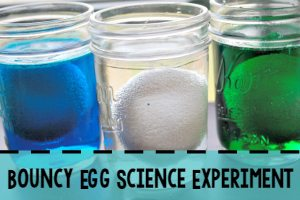 Bouncy Egg Science Experiment Sidebar