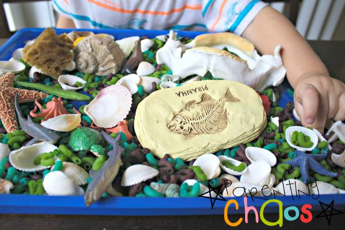 Items Needed for and Ocean Animals Science Sensory Bin