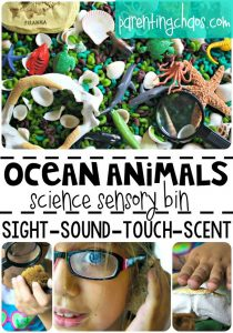 Ocean Animals Science Sensory Bin