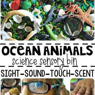 Ocean Animals Science Sensory Bin