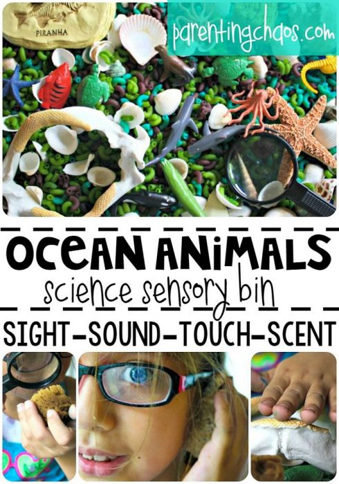 Under the Sea! Ocean Animals Sensory Bin