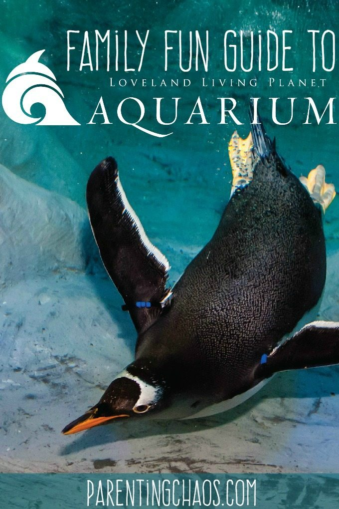 Family Fun Guide to Loveland Living Planet Aquarium in Draper, UT