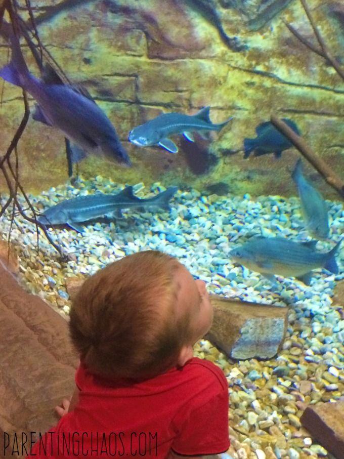 Family Fun Guide to Loveland Living Planet Aquarium in Draper, UT