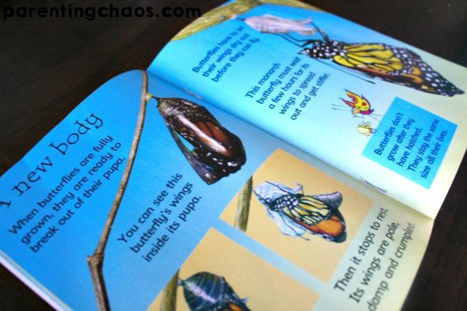 Butterfly Life Cycle Unit for Kids