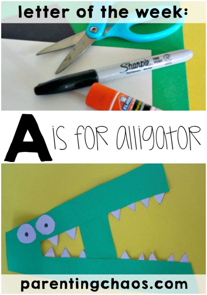 Letter of the Week: A is for Alligator