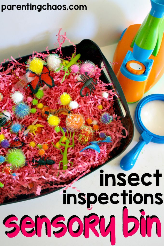 Insect Inspections Sensory Bin