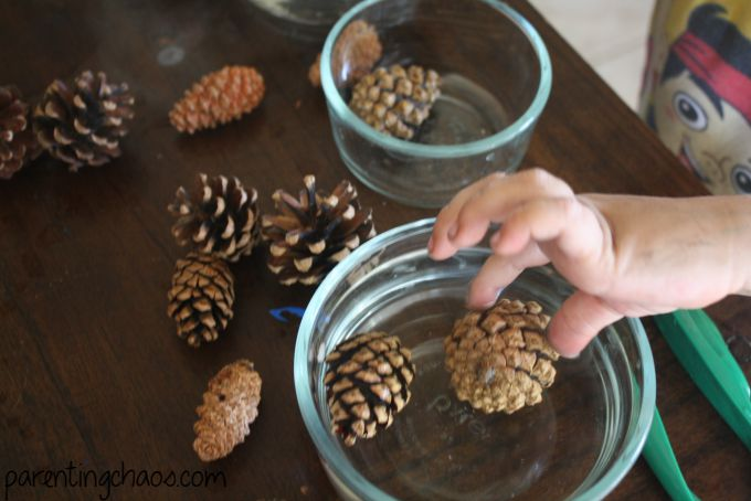 Pine Cone Science Experiment: Why Do Pine Cones Open and Close?