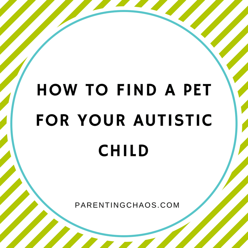How to Find a Shelter Pet for Your Autistic Child
