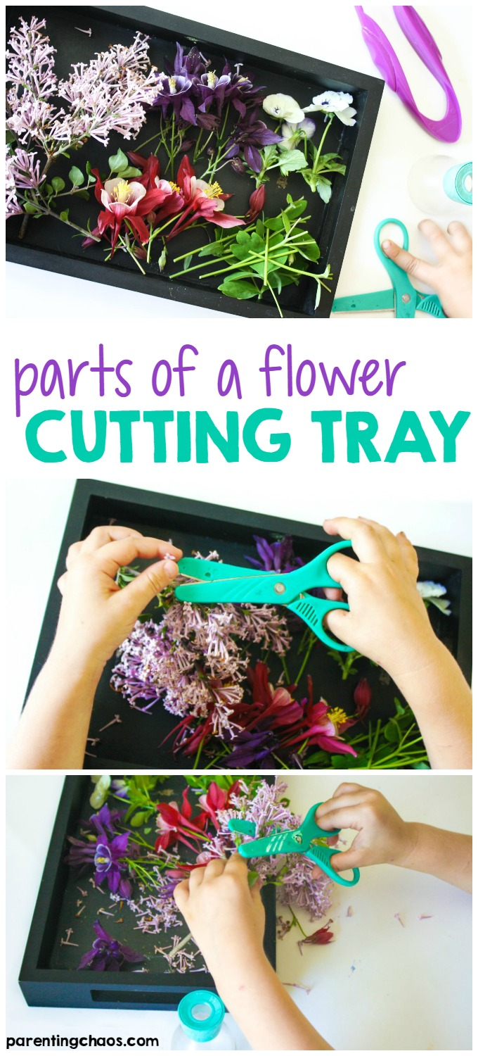This Parts of a Flower Cutting Tray was a fun scissor activity to work on my kids' basic scissor skills while getting some hands-on exploration of flowers.